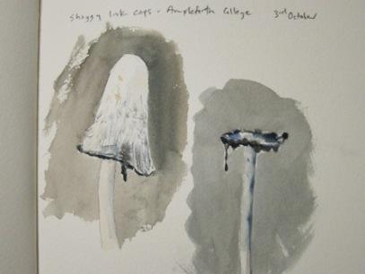Shaggy Ink Cap- watercolour in sketchbook