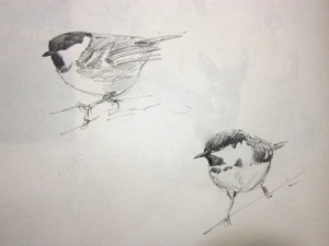 Coal Tit- pencil sketch in sketchbook