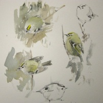Migrant Goldcrests- watercolour in sketchbook