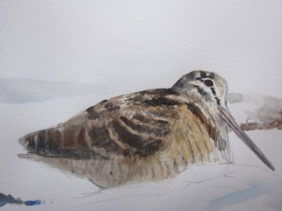 Woodcock in snow- watercolour in sketchbook