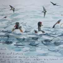 Swallows and Shelduck- watercolour in sketchbook painted on location