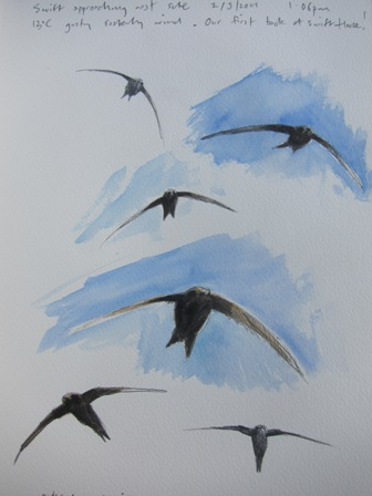 Swift approaching nest site- watercolour and crayon in sketchbook