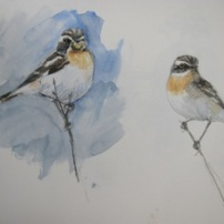 Male Whinchat (left with caterpillar)- watercolour in sketchbook