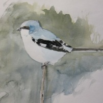 Great Grey Shrike- watercolour in sketchbook