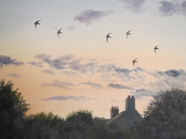 Swifts on a June evening