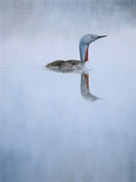 Red- throated Diver. Available at Birdscapes Gallery, Norfolk.