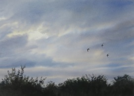 Available at Birdscapes. Painting from my book.