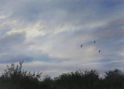 Swifts, thundery afternoon. Available at Birdfair 18-20 Aug