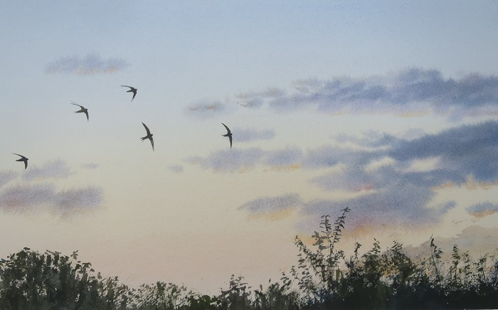 Swifts at sunse