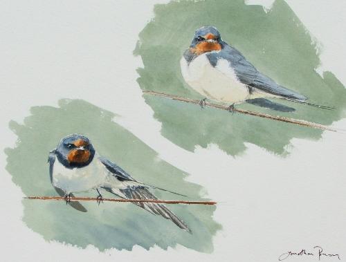 Swallow studies, watercolour in sketchbook