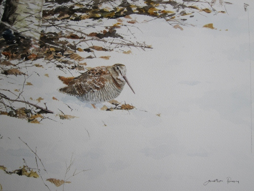 Woodcock in snow- watercolour