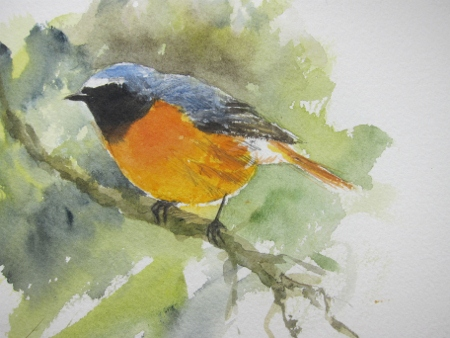 Male Redstart- watercolour in sketchbook