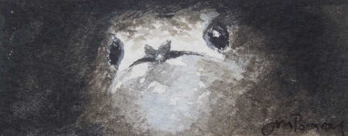 Young Swift peeping out of nest hole- watercolour