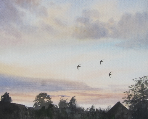 Three Swifts at dusk, May.  Watercolour