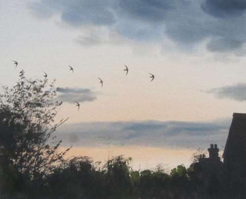 Eight Swifts at dusk, July- watercolour