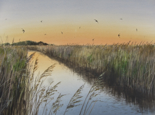 Swifts over Cley Marsh, May- watercolour