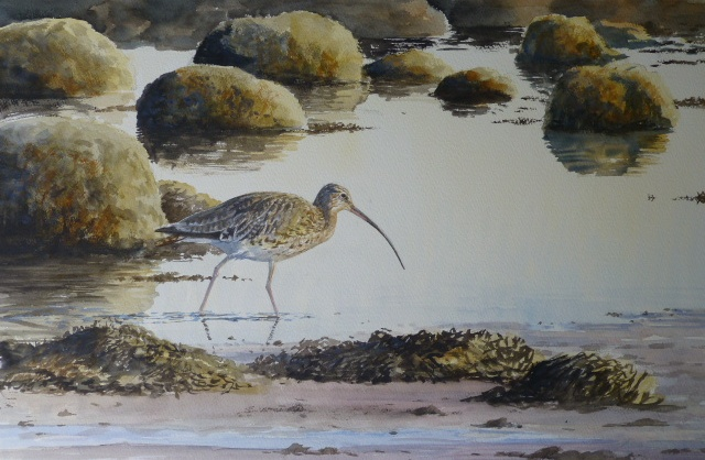 Curlew, Menai Straights, Anglesey- watercolour