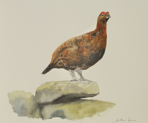 Red Grouse (2)