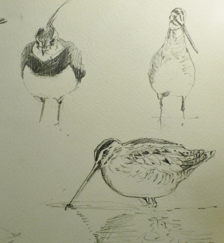 Lapwing and snipe- pencil in sketchbook