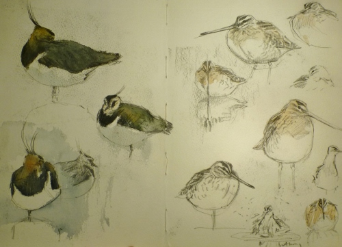 Lapwing and snipe- watercolour in sketchbook