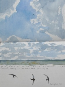 Swifts over Ampleforth, 6th May- watercolour in sketchbook