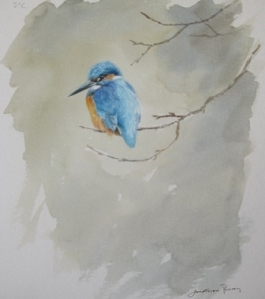 Kingfisher study