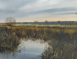 Somerset Levels at Greylake- December