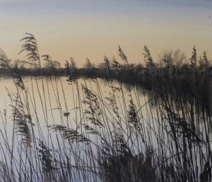 Wren in the reeds, Greylake, Somerset Levels