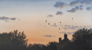 Swifts over Ampleforth, North Yorkshire