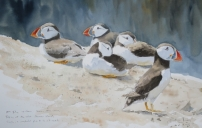 Puffins on Skomer. Available at Birdscapes, Norfolk.