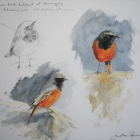 "Eastern Black Redstart at Skinningrove. Watercolour. 12 x 10.5"" £300 unframed"