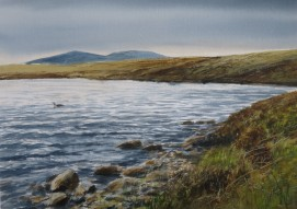 Red- throated Diver. Sutherland. Watercolour. At my studio.