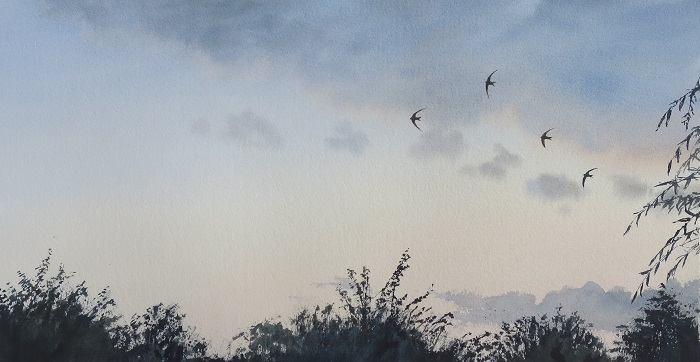 3 Swifts on a thundery afternoon. Watercolour. £400 unframed