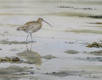 Curlew on shoreline. Watercolour. SOLD
