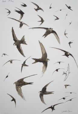 Swift studies. SOLD