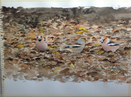 Hawfinches at Yorkshire Arboretum. Watercolour. SOLD