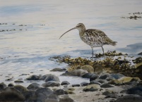 Curlew, Menai Straights. Available at Birdscapes Gallery, Norfolk.