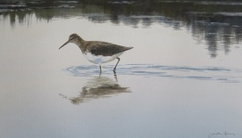 Green Sandpiper. Available at Birdscapes, Norfolk.