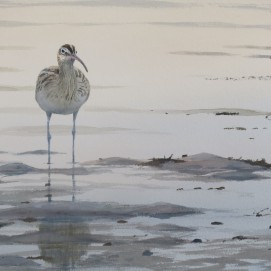 Whimbrel at sunset. Watercolour. At bIrdscapes Gallery, Norfolk.