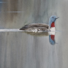 Red-throated diver. Watercolour. At Birdscapes Gallery, Norfolk.