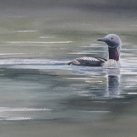 Black-throated diver. Watercolour. At bIrdscapes Gallery, NOrfolk.