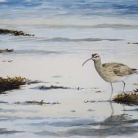 Whimbrel on shoreline. Watercolour.