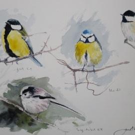 Garden bird studies. Watercolour. Available at my studio.