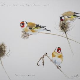 Goldfinch studies. Watercolour.