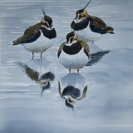 Lapwing trio in winter. Watercolour. Available at my studio or through my online shop.