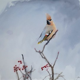 Waxwing at Whitby. Watercolour. Available in SHOP.