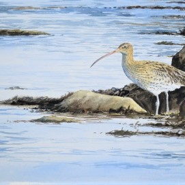 Curlew on shoreline. Watercolour. Available in SHOP.
