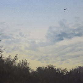 Swift just before coming in to roost. Watercolour. Available in SHOP.