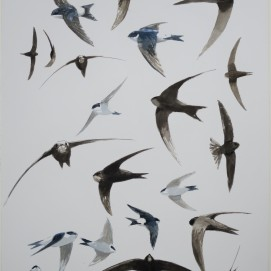 Swifts and house martins. Watercolour. Available at my studio.