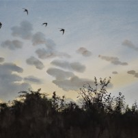 Four swifts at dusk. Watercolour. Available in online shop.